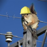 Squirrels-knocked-out-the-power