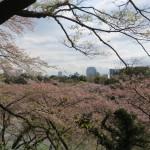 Tokyo from Kitanomaru Park
