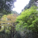 Forest outside Meiji Jingu